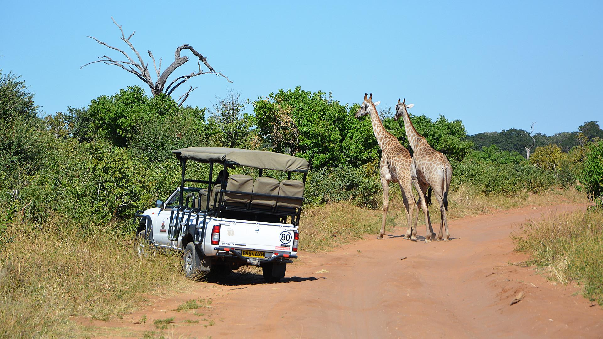Giraffen im Chobe Nationalpark (Foto: Sabina Schneider)