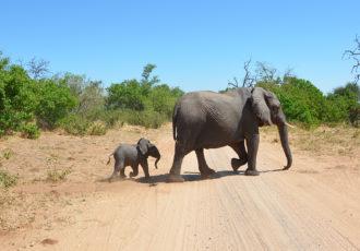 Elefanten im Chobe Nationalpark (Foto: Sabina Schneider)