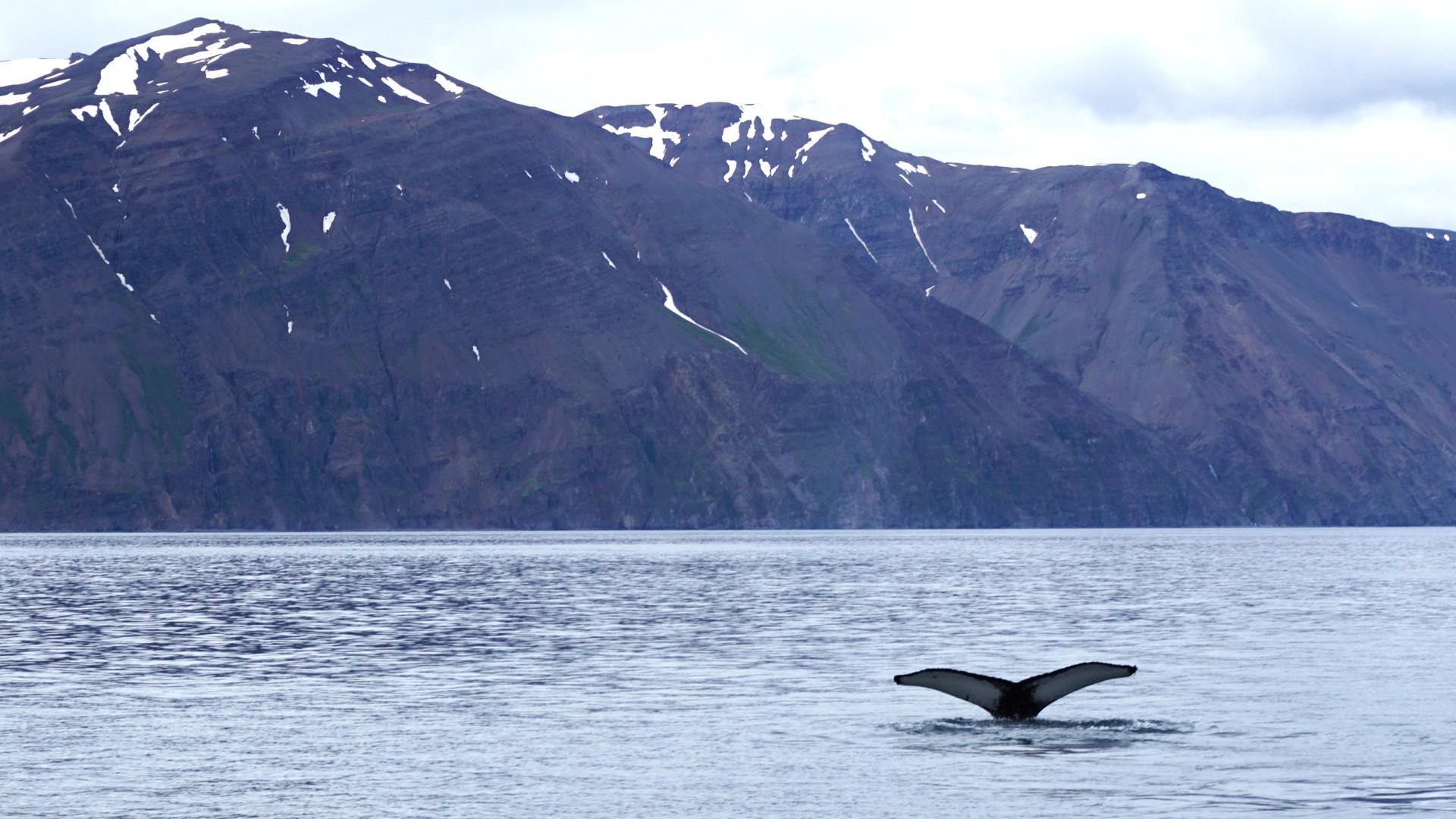 Whale Watching Island (Foto: Sabina Schneider)