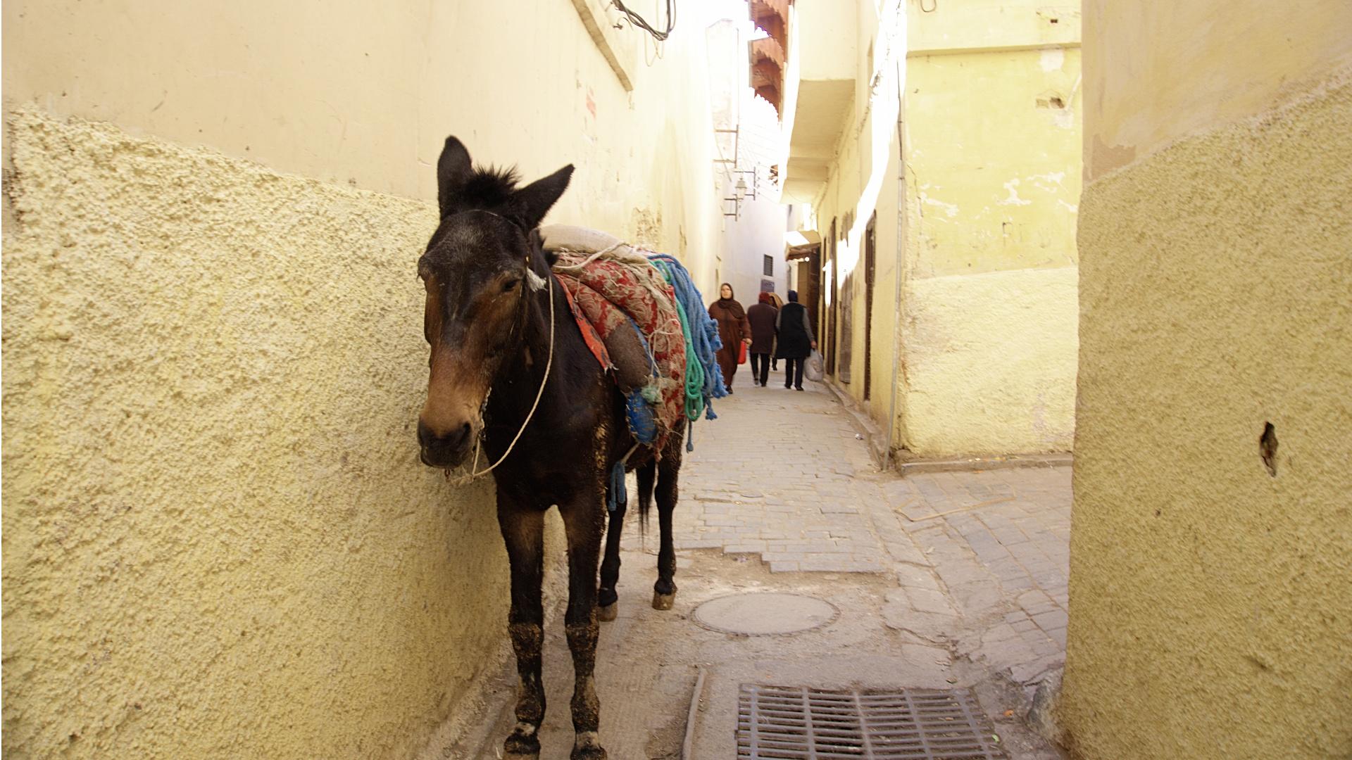 Unterwegs in Fés (Foto: Sabina Schneider)