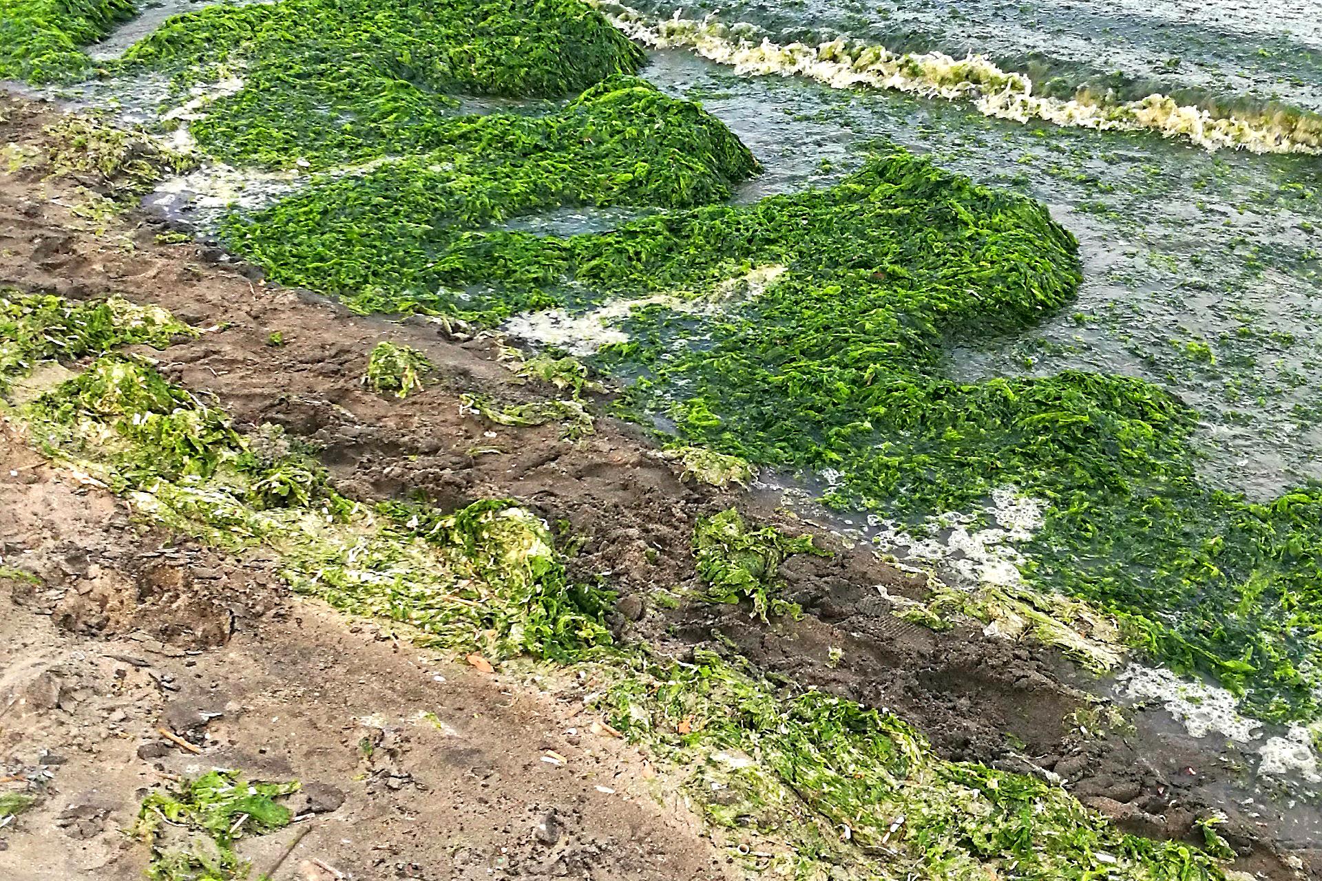 Yokohama Algen (Foto: Marina Hochholzner)