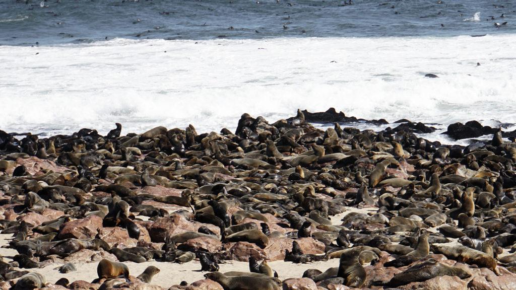 Cape Cross Namibia (Foto: Sabina Schneider)