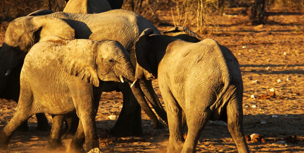 Etosha Nationalpark (Foto: Sabina Schneier)