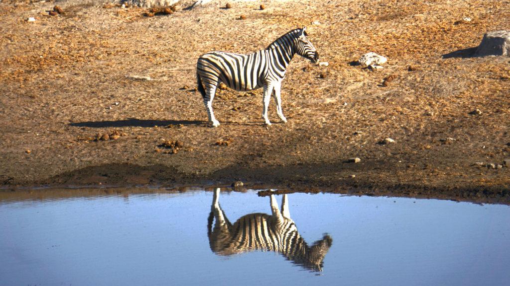 Etosha Nationalpark (Foto: Sabina Schneider)