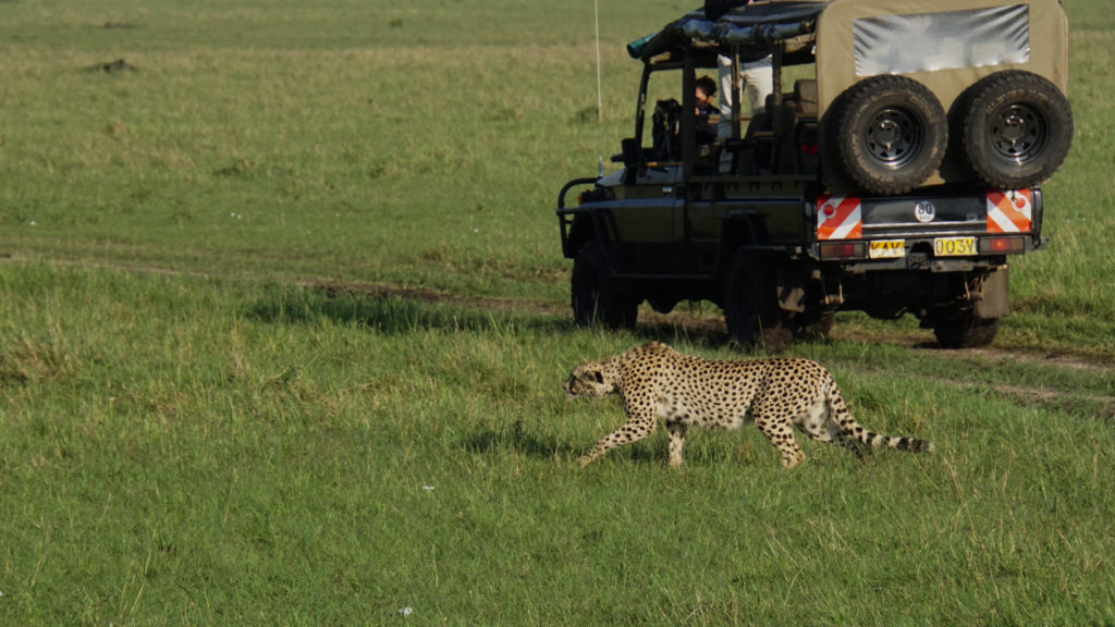 Safari (Foto: Sabina Schneider)