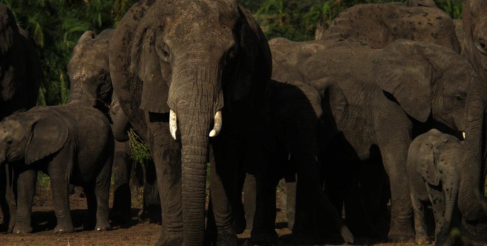 Serengeti (Foto: Sabina Schneider)