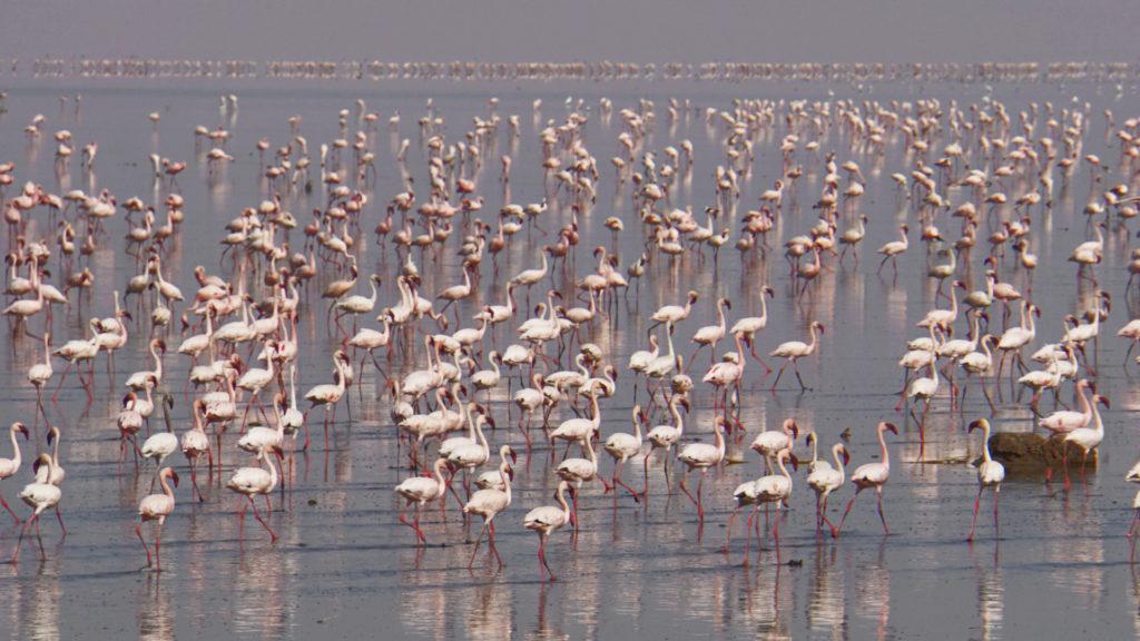 Lake Natron Tansania (Foto: Sabina Schneider)