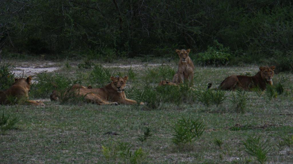 Muchsionfalls Nationalpark (Foto: Sabina Schneider)
