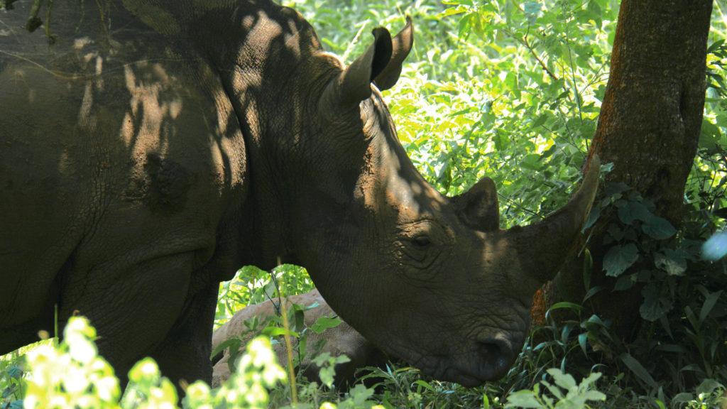 Ziwa Rhino (Foto: Sabina Schneider)