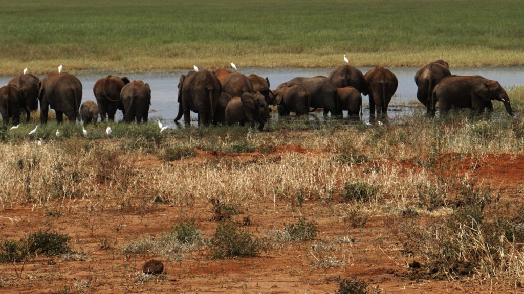 Tarangire Nationalpark (Foto: Sabina Schneider)