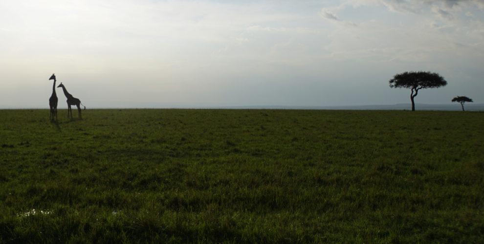 Maasai Mara Nationalpark (Foto: Sabina Schneider)