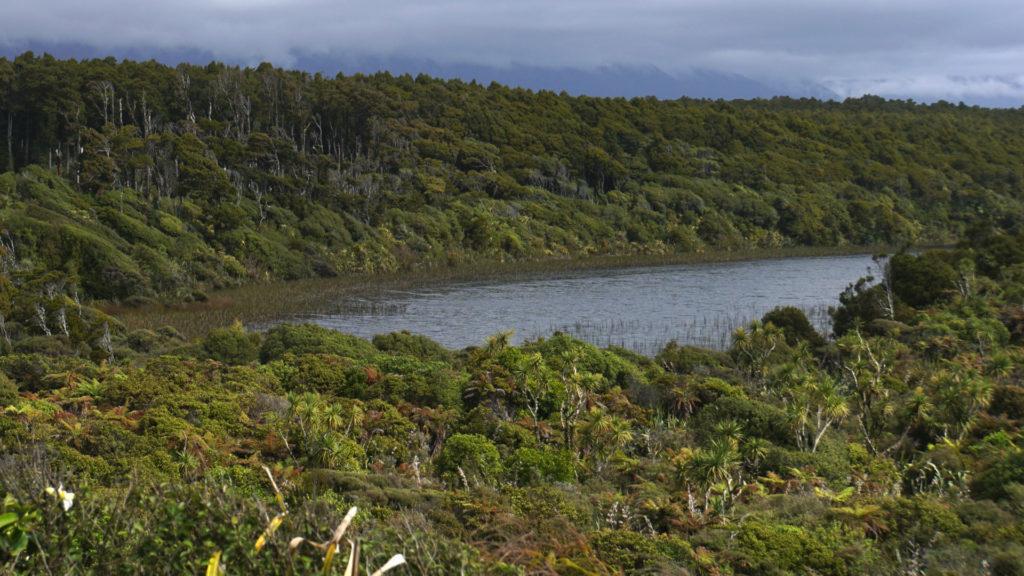 Westküste Neuseelands (Foto: Sabina Schneider)